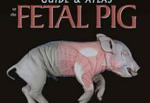 A Dissection Guide and Atlas to the Fetal Pig PDF
