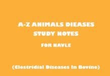 Clostridial Diseases In Bovine